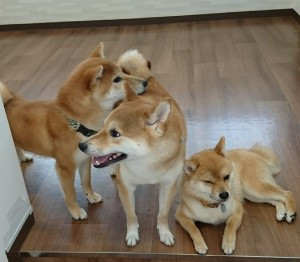 お犬様その2_190608_0366