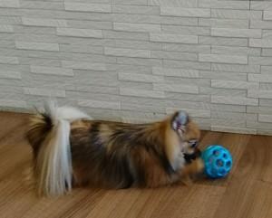 お犬様_181024_0040