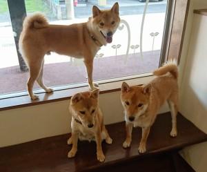 お犬様_181024_0043