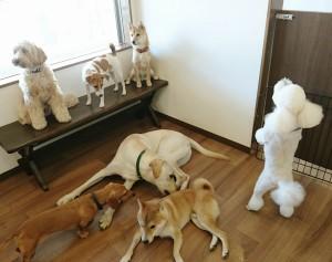 お犬様_181024_0045