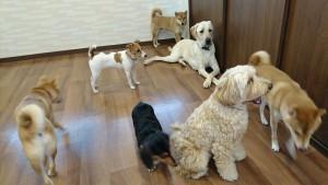 お犬様_181024_0047