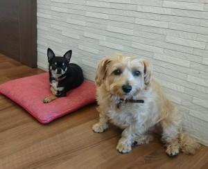 お犬様_181029_0082