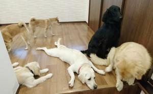 お犬様_181103_0113