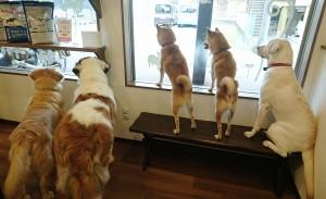 お犬様_181103_0114