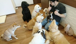 お犬様_181103_0121