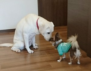 お犬様_181104_0123