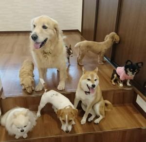 お犬様_181104_0128
