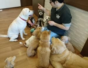 お犬様_181104_0129