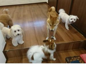 お犬様_181110_0162