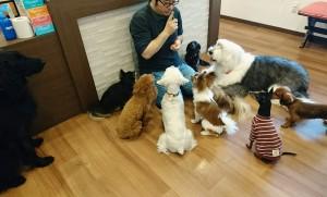 お犬様_181204_0302