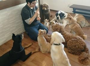 お犬様_181209_0316