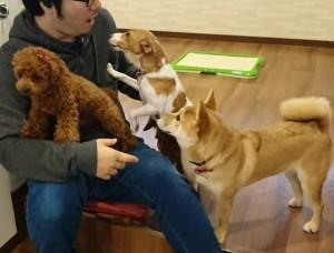 お犬様_181212_0357