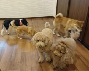お犬様_181215_0376