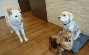お犬様_190205_0651