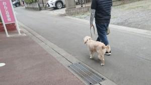 お犬様_190210_0686