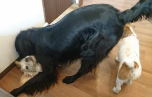 お犬様_190210_0687