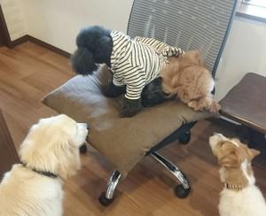 お犬様_190210_0689