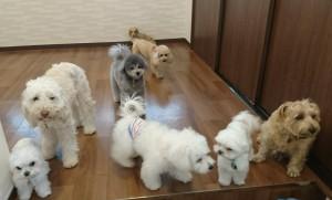 お犬様_190225_0797