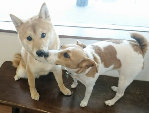 お犬様_190227_0806