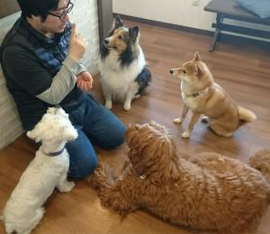 お犬様_190302_0816