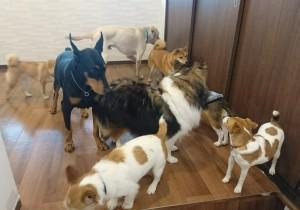 お犬様_190306_0851