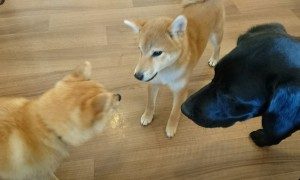 お犬様_190331_0987
