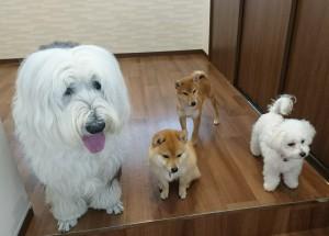 お犬様_190331_0991