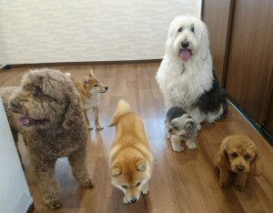 お犬様_190331_0992