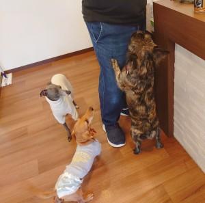 犬ちゃん3_201117_3