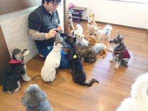 犬ちゃん3_201117_4