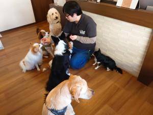 犬ちゃん3_201120_1