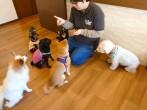 犬ちゃん3_201129_4