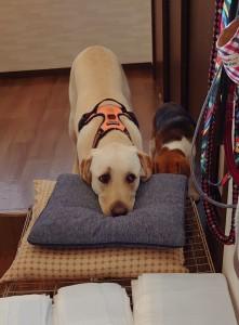 犬ちゃん2_200517_0186