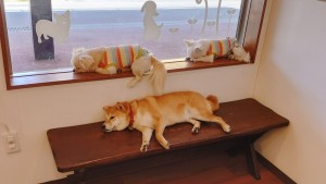 犬ちゃん2_200517_0187