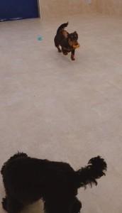 犬ちゃん2_200529_0248
