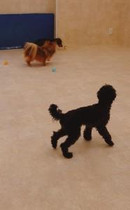 犬ちゃん2_200529_0249
