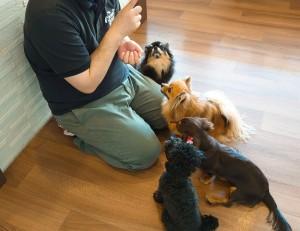 犬ちゃん2_200529_0251