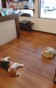 犬ちゃん2_200529_0255