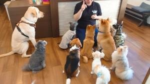 犬ちゃん2_200529_0257