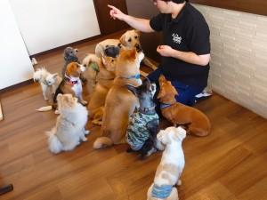 犬ちゃん2_200529_0258