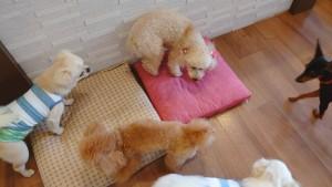 犬ちゃん2_200626_0392