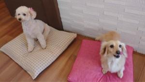 犬ちゃん2_200626_0393