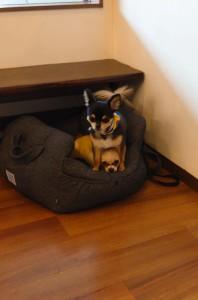 犬ちゃん2_200627_0394