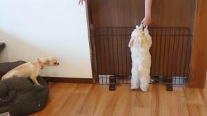 犬ちゃん2_200627_0396