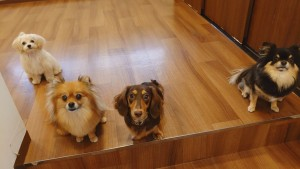 犬ちゃん2_200627_0397