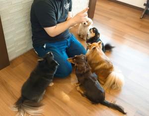犬ちゃん2_200627_0399