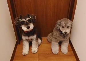 犬ちゃん2_200627_0402