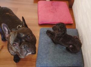 犬ちゃん2_200627_0404