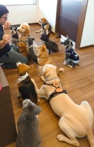 犬ちゃん2_200627_0406