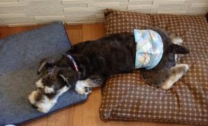 犬ちゃん2_200627_0408